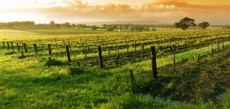 napa-valley-wine-tour-package-at-millwood-inn-and-suites-millbrae-california-top