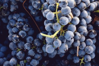 grapes-web