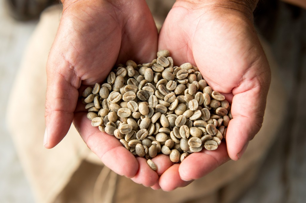 Raw coffee beans.