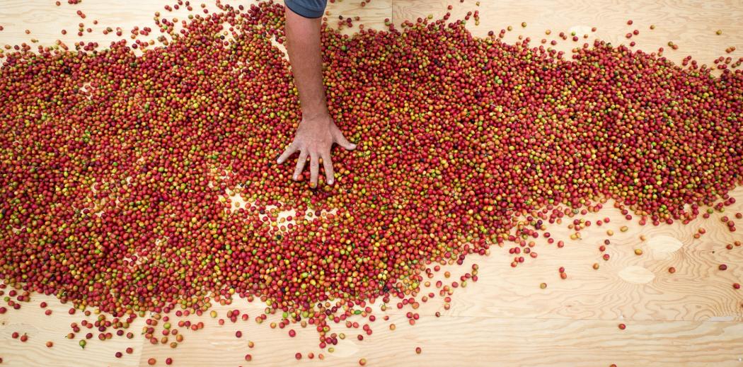 hires_overhead_cherries_drying