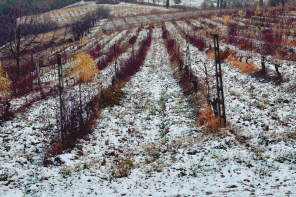 wintervineyard