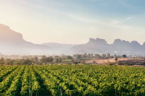 A Guide to India's Wine Regions