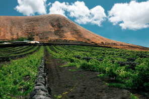 Winemaking on the Canary Islands