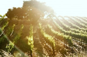Wine Regions of The Golden State