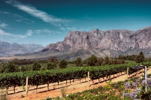 Guide to Stellenbosch