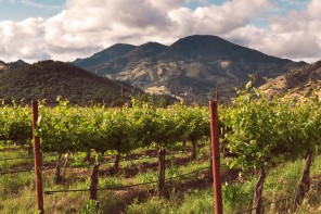 Appellation Appreciation: Napa Valley