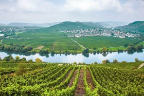 Appellation Appreciation: Mosel