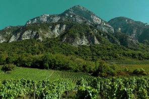 Winemaking in the French Alps
