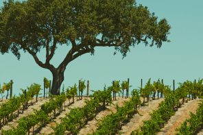 Appellation Appreciation: Paso Robles
