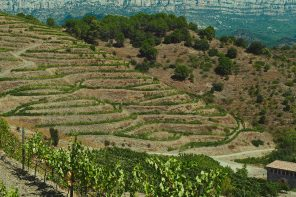 Appellation Appreciation: Priorat