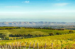 Appellation Appreciation: McLaren Vale