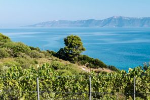 Water and Wine: How Bodies of Water Help Vines Make Phenomenal Wines