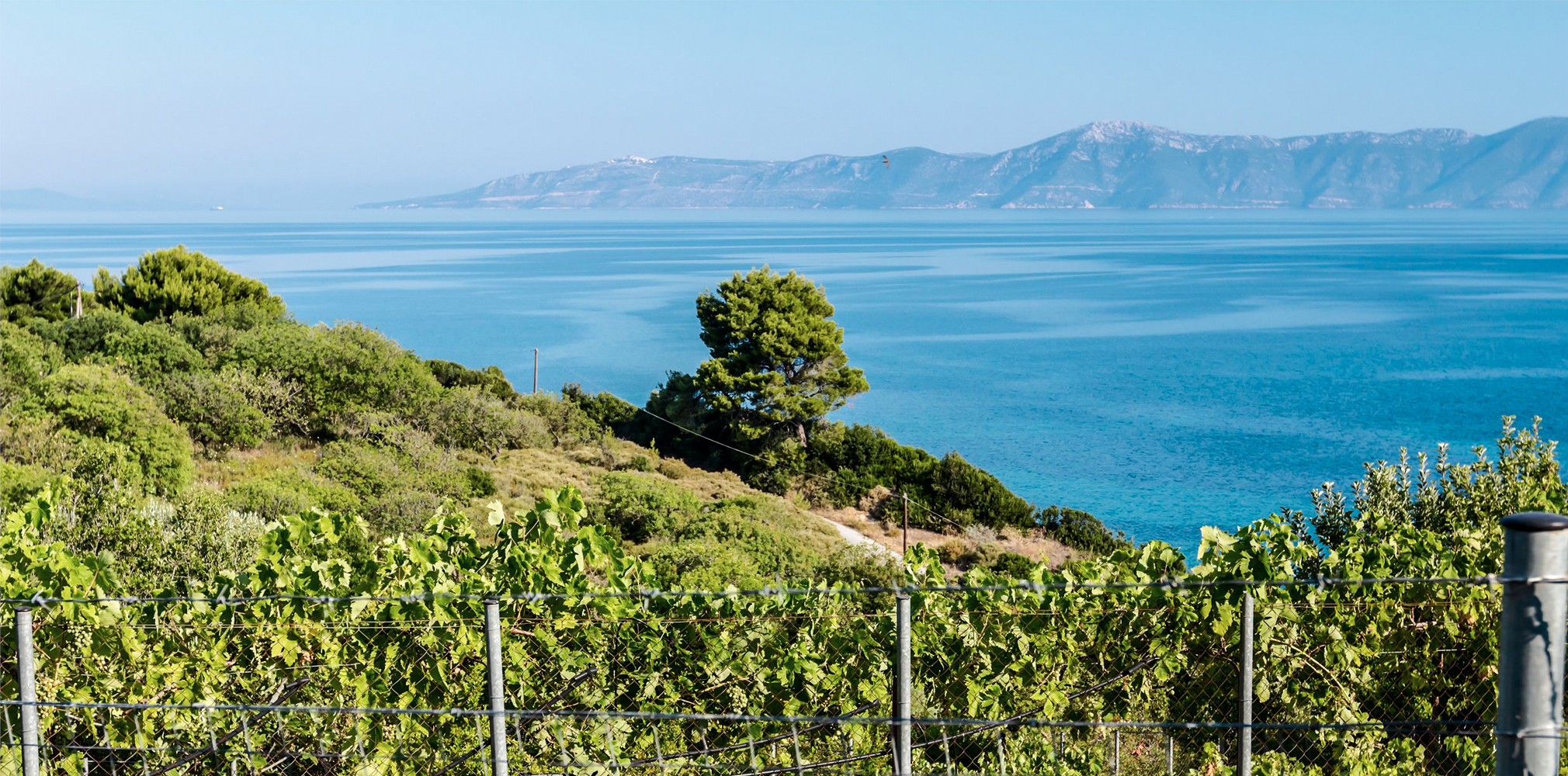 Water and Wine: How Bodies of Water Help Vines Make ...