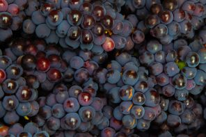 What is Carignan?