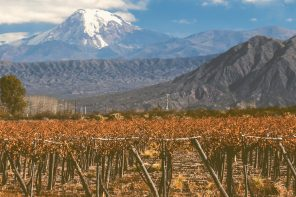 The Wines of Patagonia