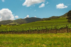 California Wine Regions: the Santa Barbara Edition