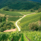 The Wines of Alsace