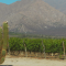 A Guide to Mexico's Wine Regions